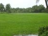 dakshina_kannada_district_during_monsoon_season